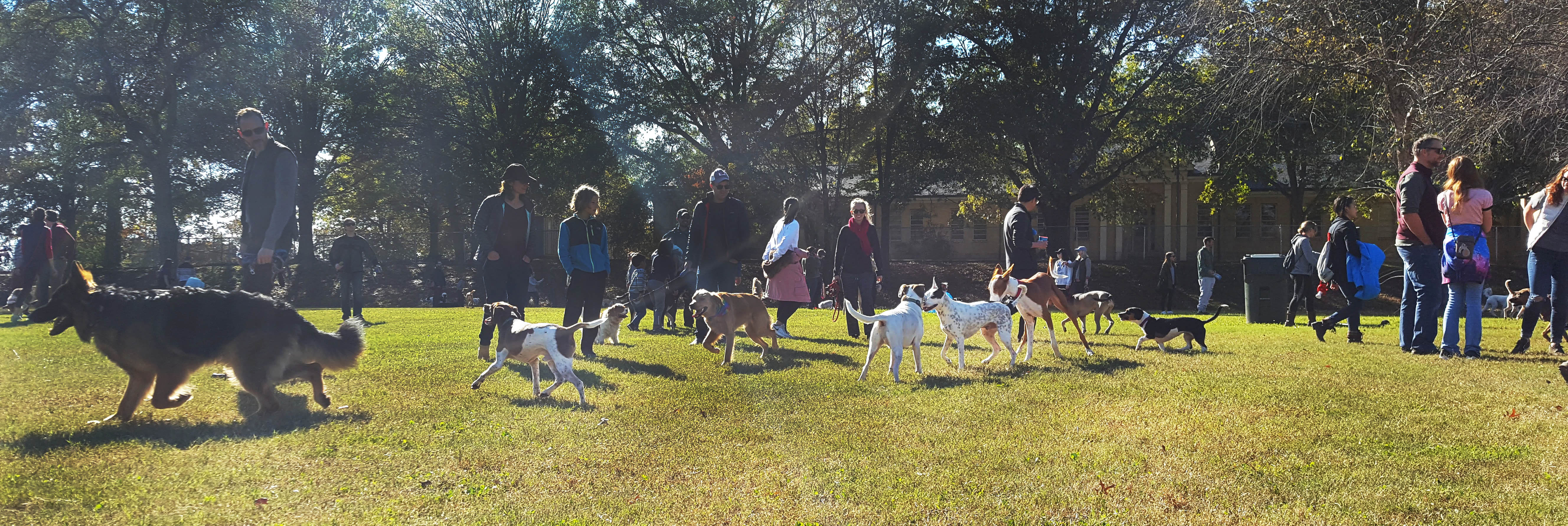 People and their dogs at Dix Park's new Dog Park