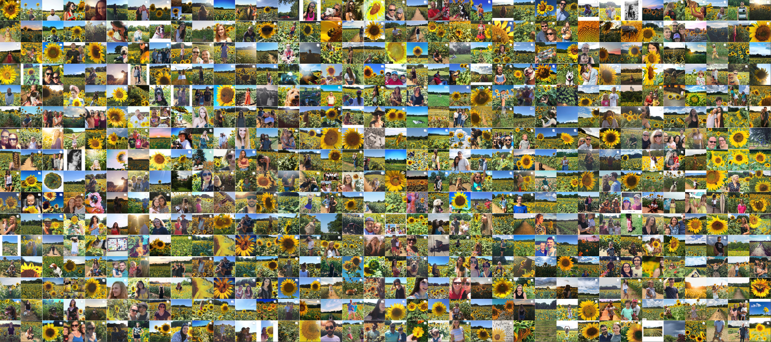 collage of sunflower at Dix Park
