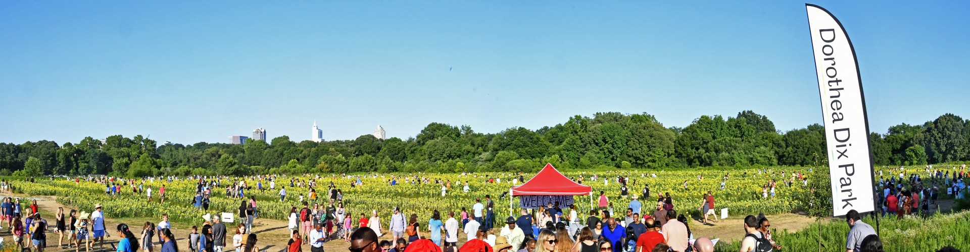 sunflower field at Dix Park full of people with downtown Raleigh skyline