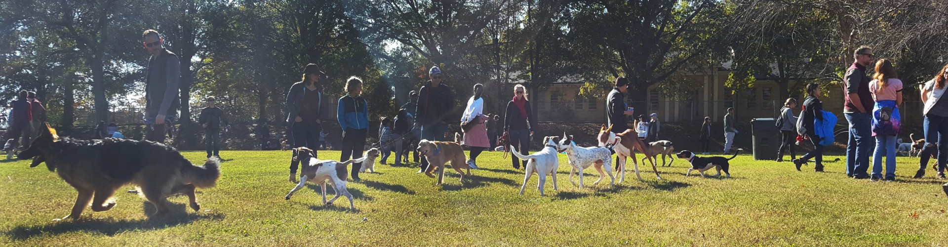 People and off-leash dogs at the Dix Park Dog Park